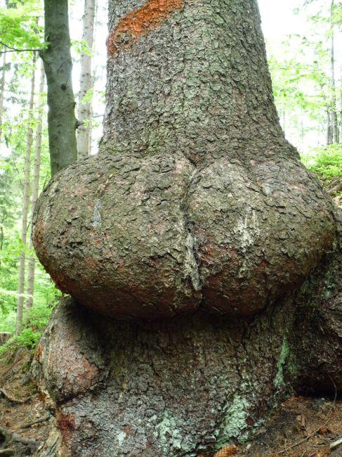 Zdjęcia: .., .., takie tam drzewo :)  o okolicy Baraniej Góry, POLSKA