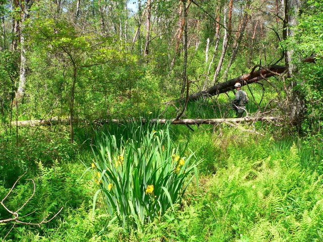 Zdjęcia: Podmokły las w okolicy Chełma, Lubelszczyzna, Dzicz :), POLSKA
