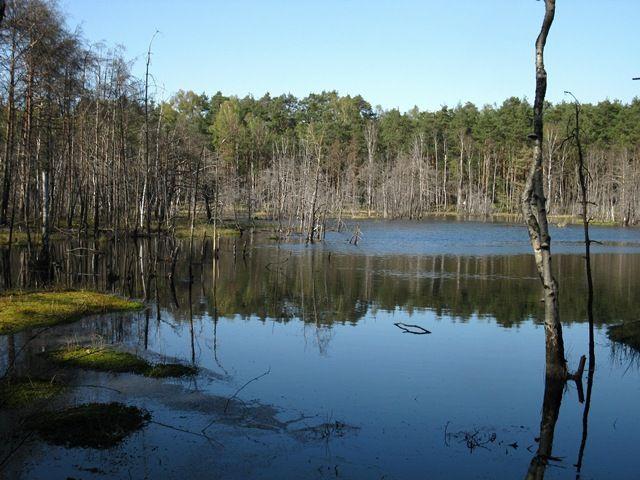 Zdjęcia: Mazowiecki Park Krajobrazowy, Mazowsze, Bocianowskie Bagno, POLSKA