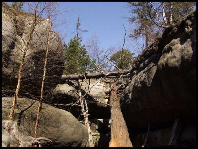 Zdjęcia: szczeliniec, Góry stołowe, kłoda, POLSKA