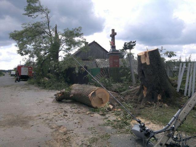 Zdjęcia: Wólka Modrzejowa, mazowieckie, Po huraganie, POLSKA