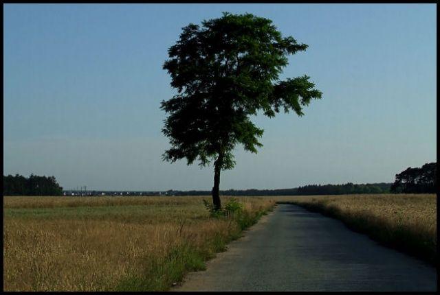 Zdjęcia: wyprawa rowerowa, śląsk opolski, drzewo na drodze, POLSKA