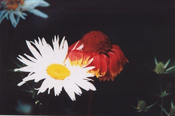 Zdjęcia: Buków, Kwiaty, POLSKA