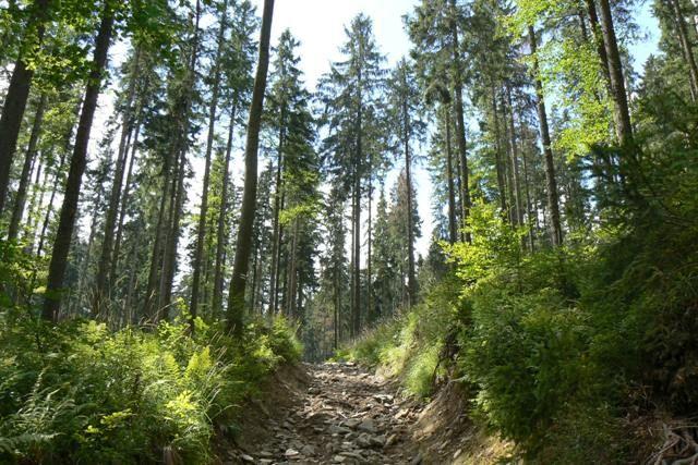 Zdjęcia: Beskid Makowski (Średni), Beskidy, Szlak z Hali Krupowej do Zawoi, POLSKA