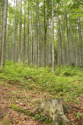 Zdjęcia: Beskid Makowski, Beskidy, Szlak z Jordanowa na Halę Krupową, POLSKA