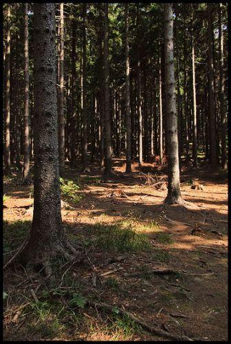 Zdjęcia: Pokrzywna, Góry Opawskie, szlak, POLSKA