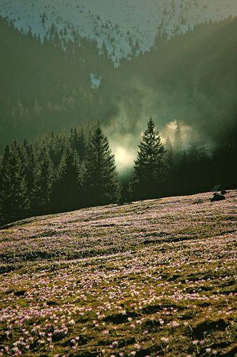 Zdjęcia: Dolina Chocholowska, Tatry, płoną góry ,płona lasy, POLSKA