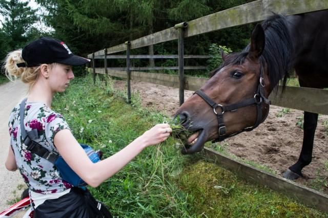 Zdjęcia: Tajno, Podlasie, Koń, POLSKA