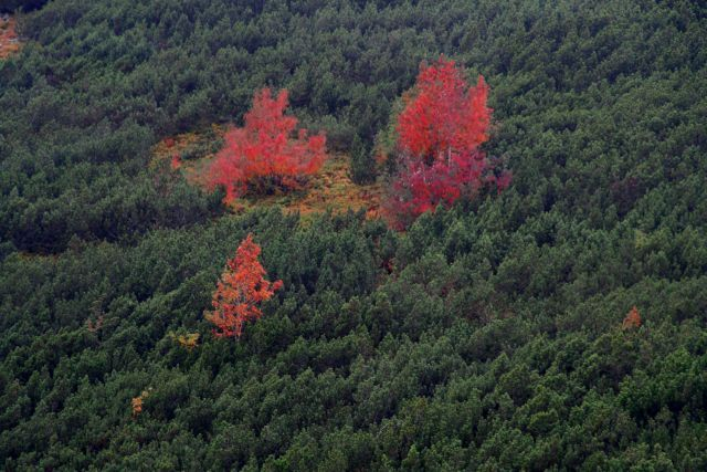 Zdjęcia: Tatry, Jesień w Tatrach 2, POLSKA