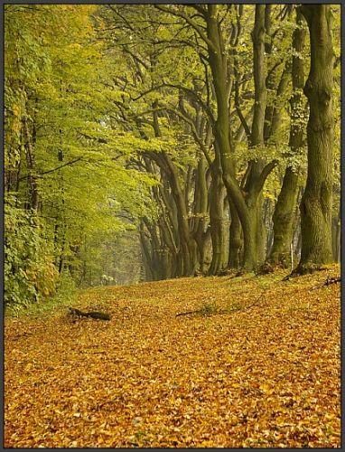Zdjęcia: Góra Świętej Anny, woj.Opolskie, moja jesień 5, POLSKA