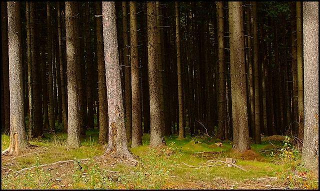 Zdjęcia: Góra Świętej Anny, woj.Opolskie, moja jesień 7, POLSKA