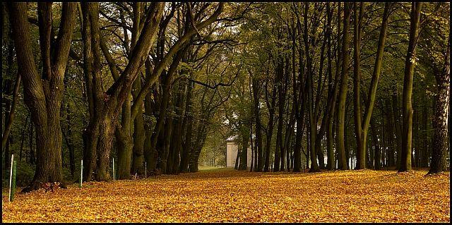 Zdjęcia: Góra Świętej Anny, woj.Opolskie, moja jesień 8, POLSKA