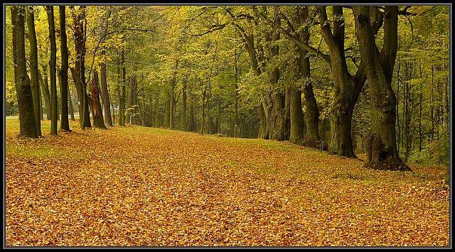Zdjęcia: Góra Świętej Anny, Ślask Opolski, jesień c.d., POLSKA
