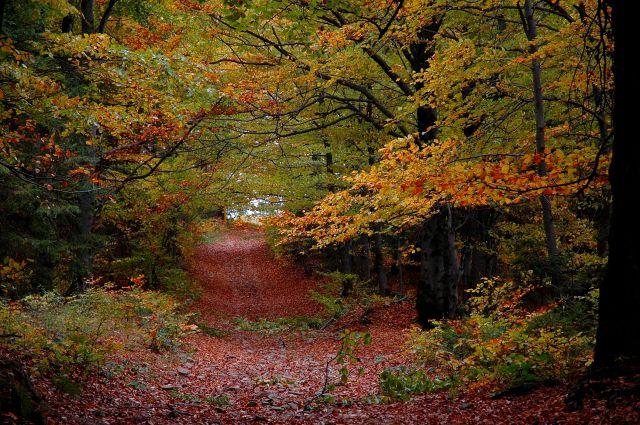 Zdjęcia: Beskid Żywiecki, Beskid Żywiecki, jesień w Beskidach, POLSKA