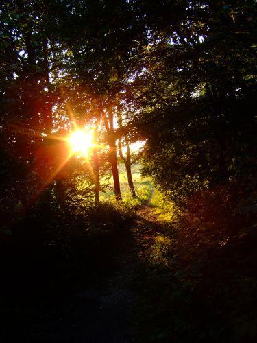 Zdjęcia: okolice klasztoru w Tyńcu, małopolska, w lesie, POLSKA