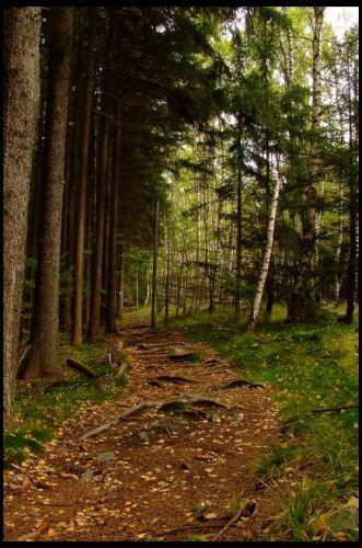 Zdjęcia: Wejście na Biskupą Kopę ,szlak czerwony, Góry Opawskie, jesień , POLSKA