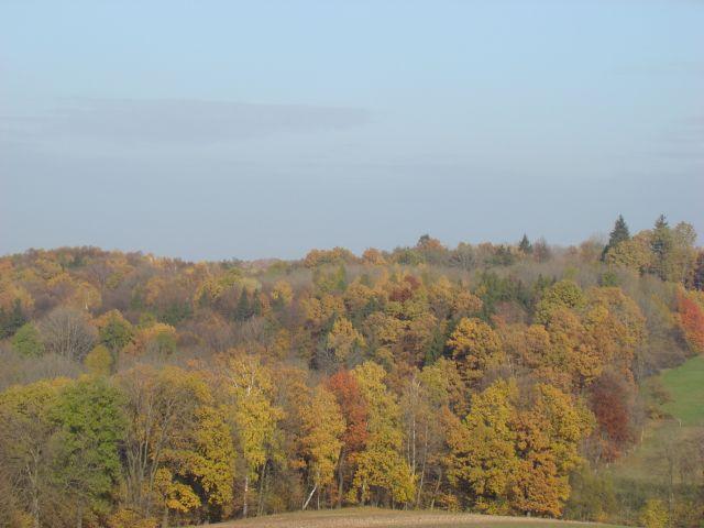 Zdjęcia: Zamarski, Śląsk, barwy jesieni, POLSKA