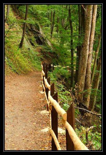 Zdjęcia: Pokrzywna, Góry Opawskie, ścieżka, POLSKA