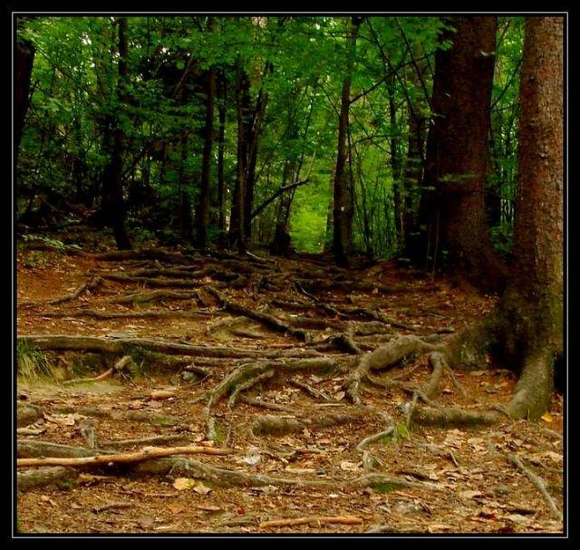 Zdjęcia: Pokrzywna, Góry Opawskie, ścieżka w lesie, POLSKA