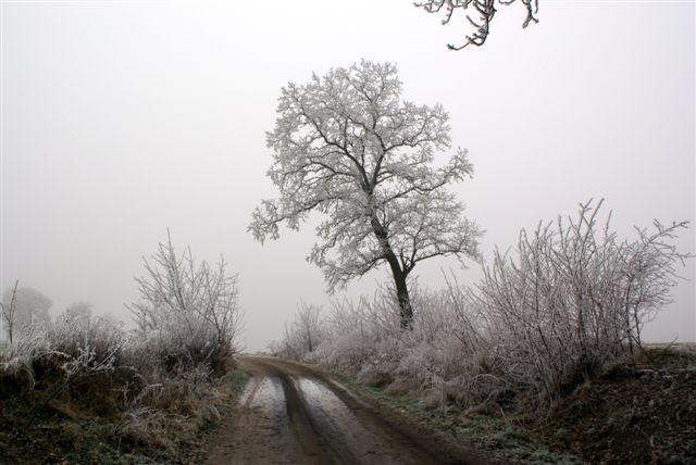 Zdjęcia: gdzieś w okolicach Jastrowia.., drzewo, POLSKA