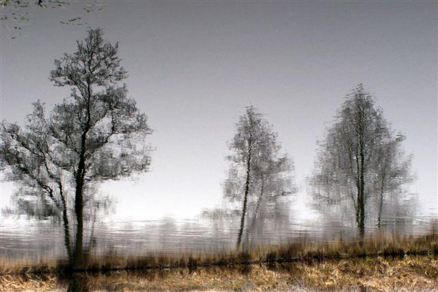 Zdjęcia: gdzieś w okolicach Jastrowia.., drzewa ..inaczej, POLSKA