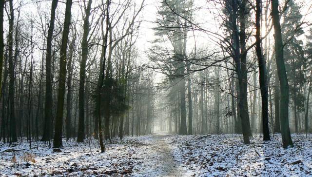Zdjęcia: okolice Bytomia, Śląsk, ścieżką..., POLSKA