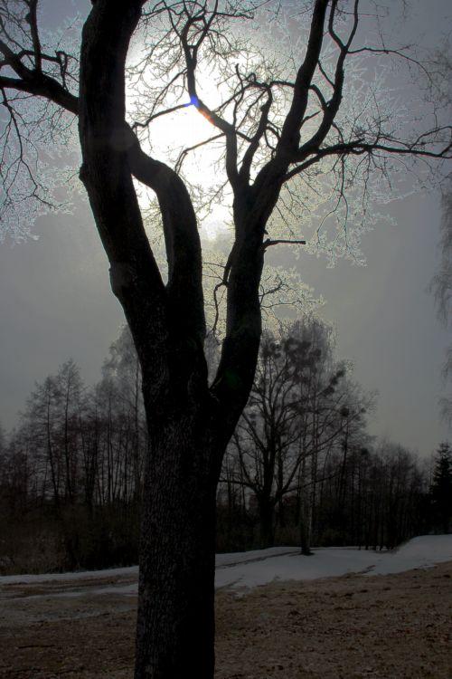 Zdjęcia: pod olsztynem, mazury, rpzświetlone dzrewo, POLSKA