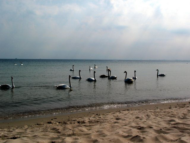 Zdjęcia: nad morzem, Bałtyk, Gdańsk, POLSKA