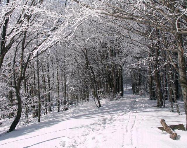 Zdj�cia: Na szlaku, Beskid Niski, Zima w Beskidzie Niskim, POLSKA