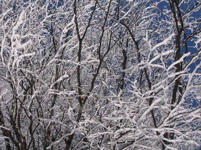 Zdjęcia: Na szlaku, Beskid Niski, Ośnieżone drzewa, POLSKA