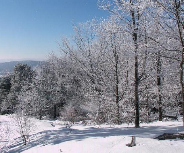 Zdjęcia: Na szlaku, Beskid Niski, Zima w Beskidzie Niskim, POLSKA