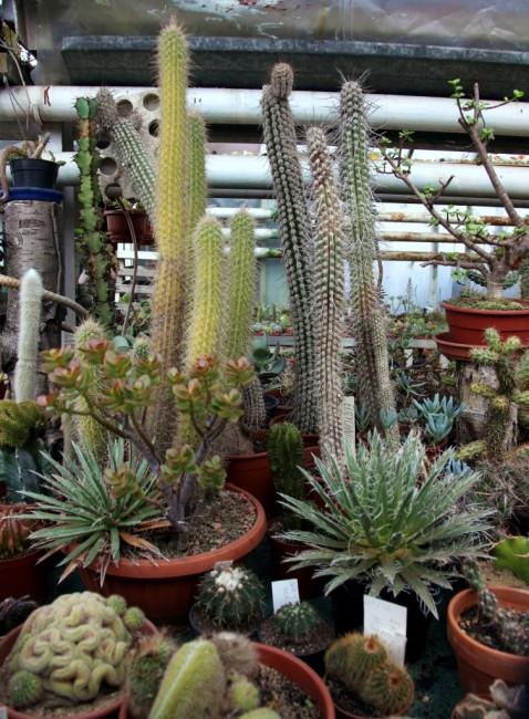 Zdjęcia: Hodowla kaktusów i innych sukulentów, Rumia, Kolekcja, POLSKA