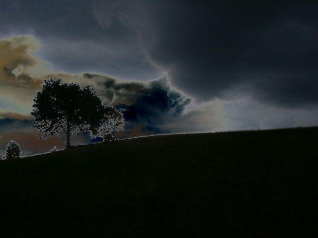 """Zdjęcia: Zakopane, Tatry, drzewo """"przed burzą"""", POLSKA"""