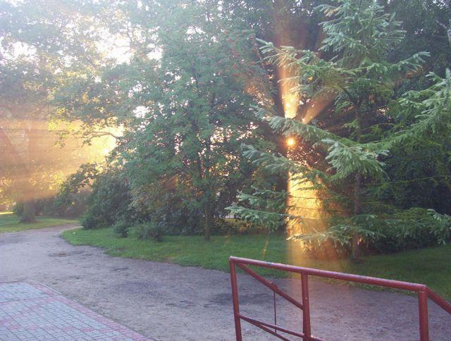 Zdjęcia: trzebcz szlachecki, o wschodzie, POLSKA