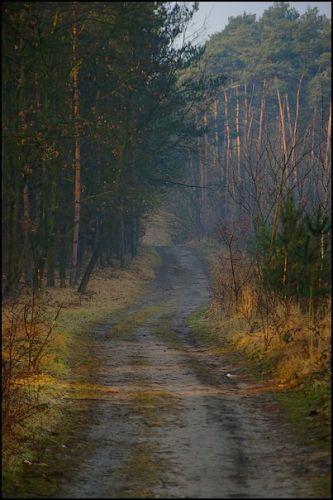 Zdj�cia: las, woj.Opolskie, mg�a 1, POLSKA