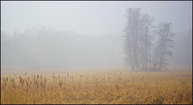 Zdjęcia: las, woj.Opolskie, mgła 2, POLSKA