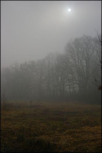 Zdjęcia: las, woj.Opolskie, mgła 3, POLSKA