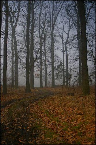 Zdj�cia: las, woj.Opolskie, �cie�ka , POLSKA