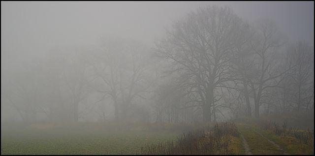 Zdjęcia: las, woj.Opolskie, mgła 4, POLSKA