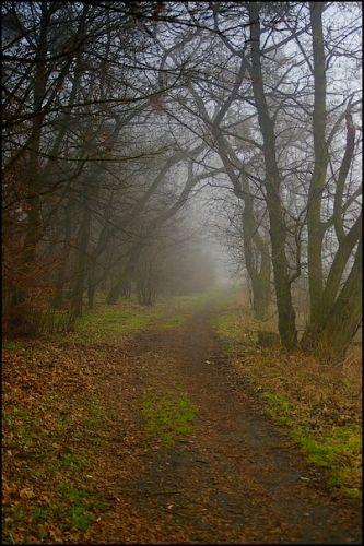 Zdjęcia: las, woj.Opolskie, mgła 5, POLSKA