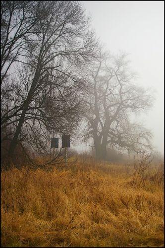 Zdjęcia: las, woj.Opolskie, mgła 6, POLSKA