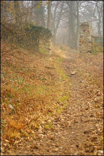 Zdjęcia: las, woj.Opolskie, brama, POLSKA