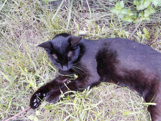 Zdjęcia: kot, POLSKA