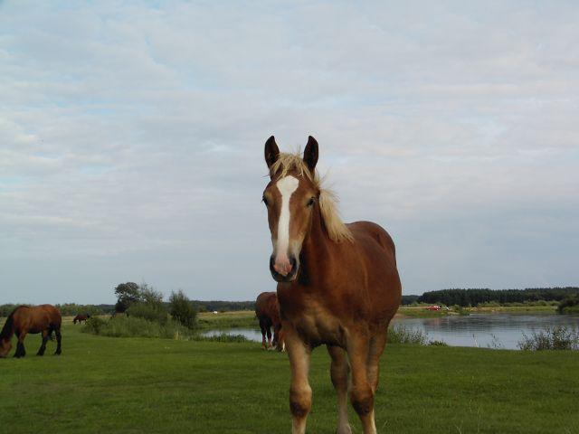 Zdjęcia: koń, POLSKA