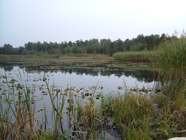 Zdj�cia: mazowiecki park krajobrazowy, stawik w lesie, POLSKA