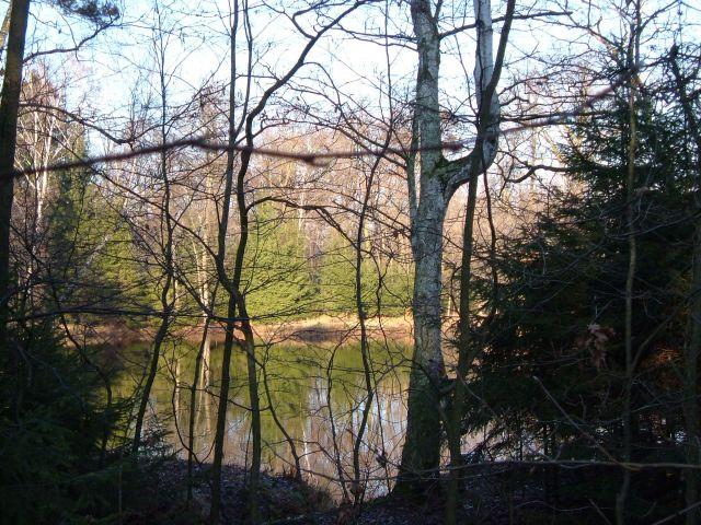 Zdjęcia: mazowiecki park krajobrazowy, inny stawik w lesie, POLSKA