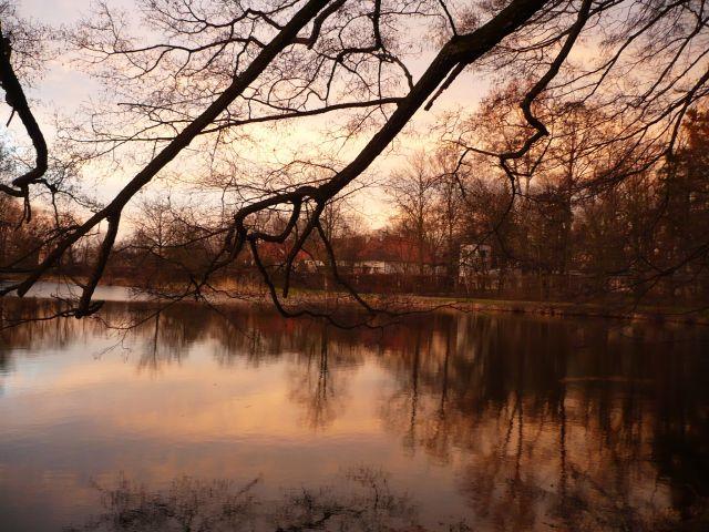Zdjęcia: Park w Nieborowie, Mazowsze, przedwiosnie o zachodzie słonca, POLSKA