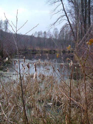 Zdjęcia: mazowiecki park krajobrazowy, mazowiecki park krajobrazowy, a wiosny nie widać, POLSKA