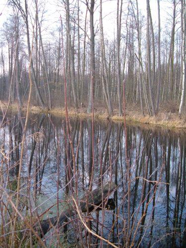 Zdj�cia: mazowiecki park krajobrazowy, mazowiecki park krajobrazowy, czekamy na troch� zieleni, POLSKA