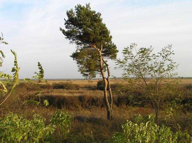 Zdjęcia: Międzyrzecz, lubuskie, listopad, POLSKA
